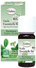 Perfumería y cosmética Bio aceite esencial de ravensara 100% - Galeo Organic Essential Oil Ravintsara